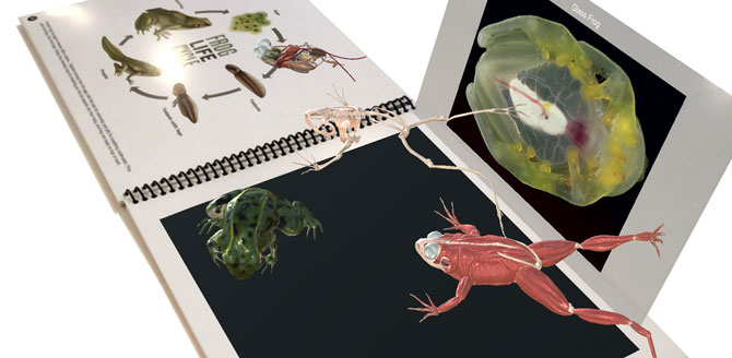Reptiles & Amphibians AR Book - 3D Frog Anatomy