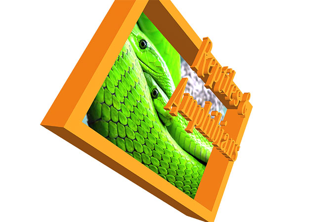 Reptiles & Amphibians Book - AR Cover